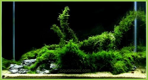 aquarien beispiele aquarienmoos aquascaping aquarienpflanzen aquavas ferka vimi. Black Bedroom Furniture Sets. Home Design Ideas